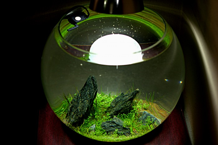 Iwagumi Bowl